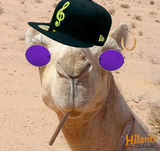 hip hop camel