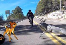Cyclist Hits Deer